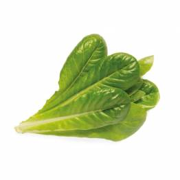 Click and Grow Smart Garden Refill 3-pack - Romaine Lettuce