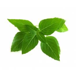 Click and Grow Smart Garden Refill 3-pack - Thai Basil